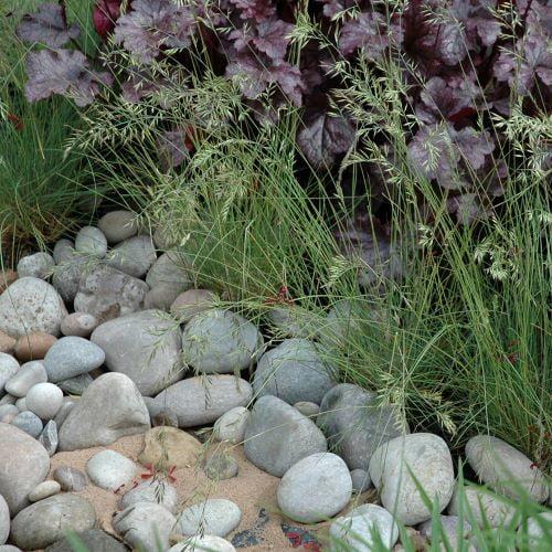 Scottish Cobbles and plants
