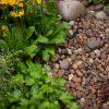 Scottish Pebbles and planting