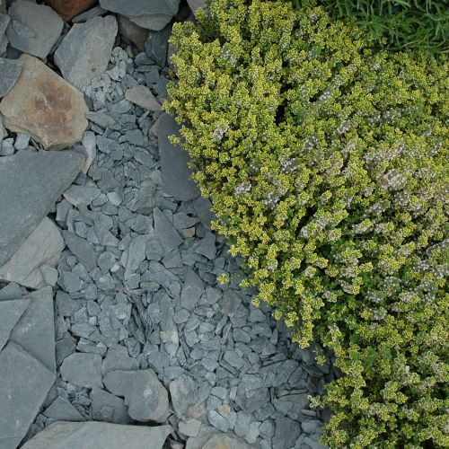 Black Slate chippings with planting