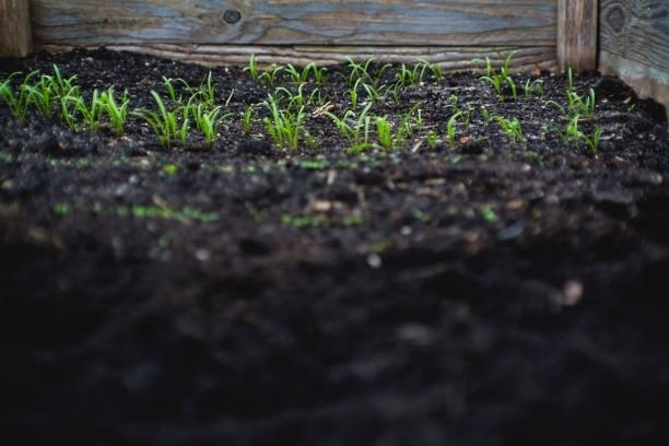 4 reasons why you should care about soil structure