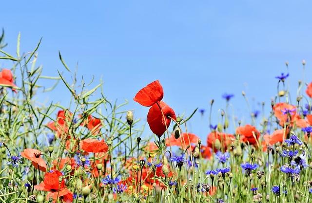 Wildflower meado