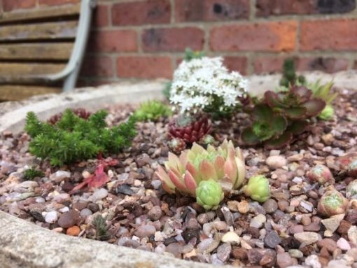Horticultural grit with succulents