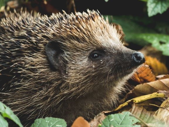 6 ways to make your garden safer for hedgehogs