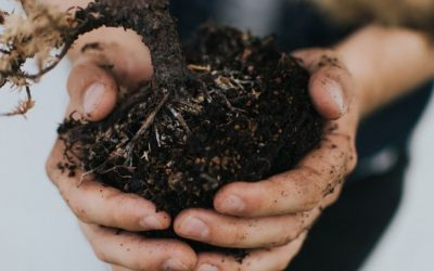 Three minute guide to choosing topsoil