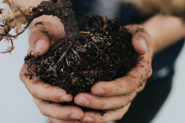Three minute guide to choosing topsoil