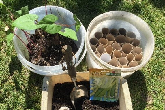 Plastic tubs being used as a mini greenhouse