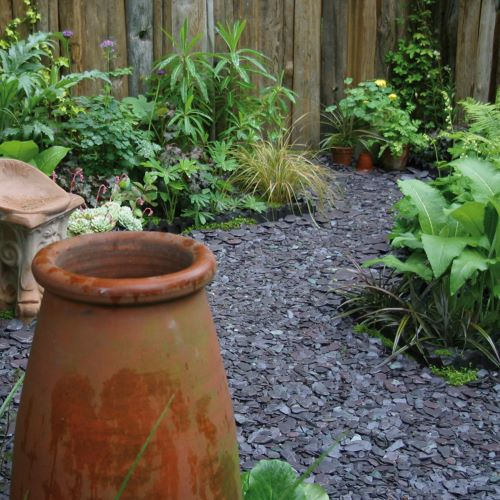 Blue slate chippings with plants and terracotta pot