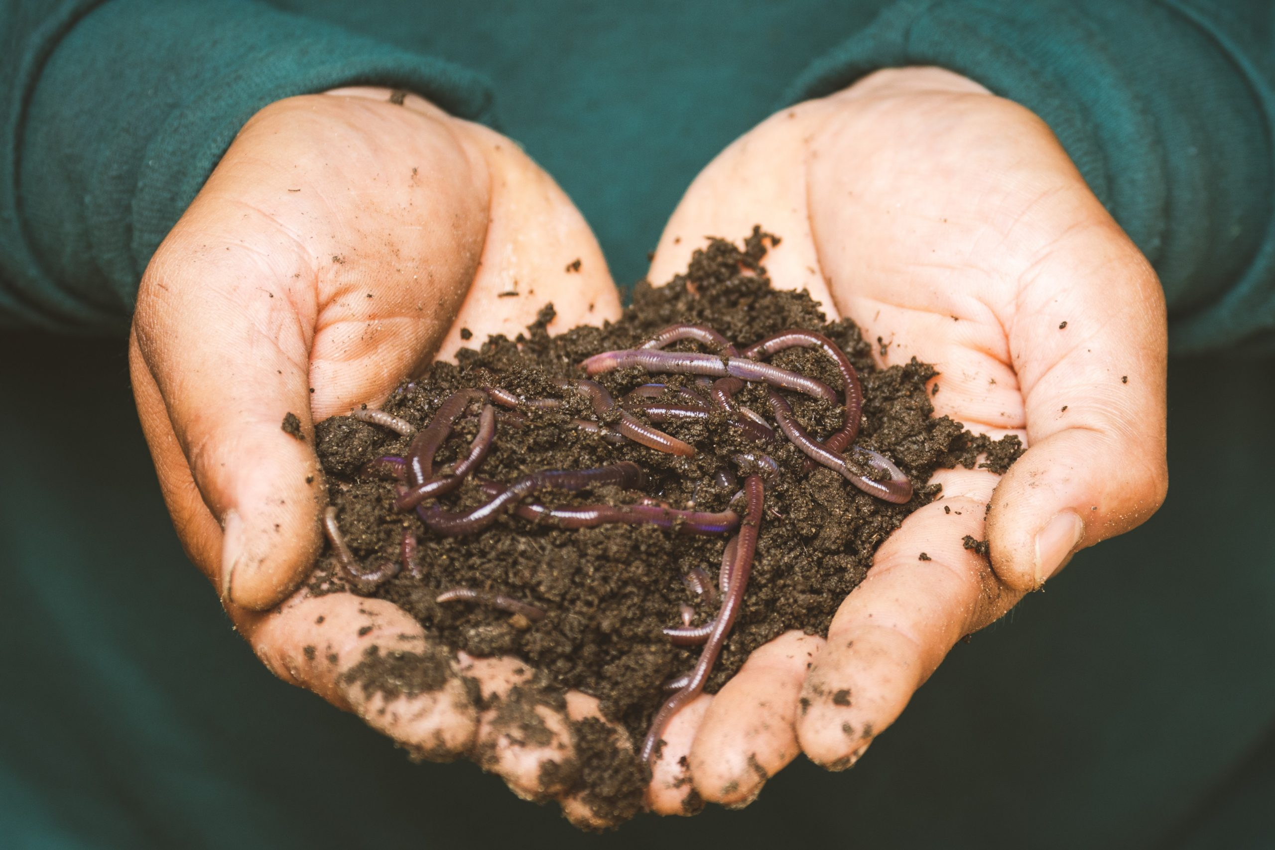 With the no dig method, add organic matter and let worms improve the soil for you